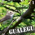 Descubriendo la ciudad de Gualeguaychu
