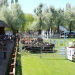 Exposición Rural de Palermo 2011