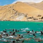 Paracas, el destino ideal para los amantes de la naturaleza